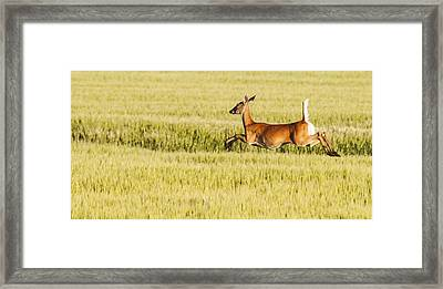 Running The Field Framed Print by Don Durfee