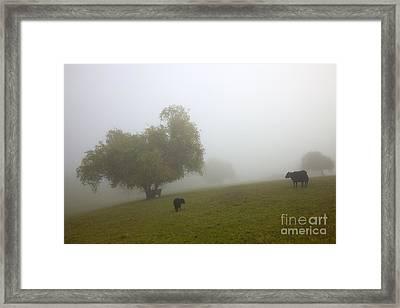 Rural Fog Framed Print by Mike  Dawson