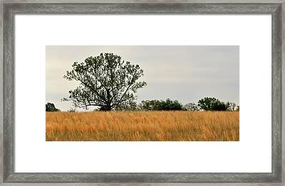 Rural Landscape Framed Print by Marty Koch