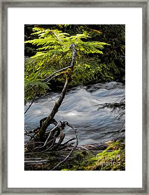 Rush Framed Print by Billie-Jo Miller