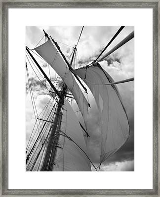 Russell Tucker Thompson Nz Framed Print by David Barringhaus