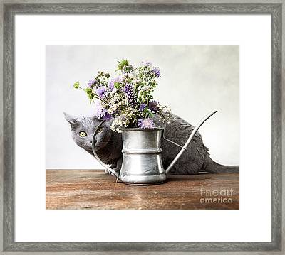 Russian Blue 03 Framed Print by Nailia Schwarz