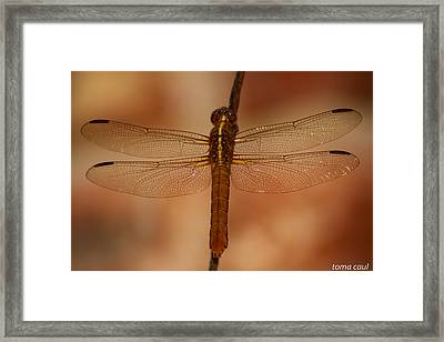 Rusted Hope 2 Framed Print by Toma Caul