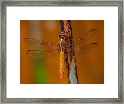 Rusted Hope Framed Print by Toma Caul