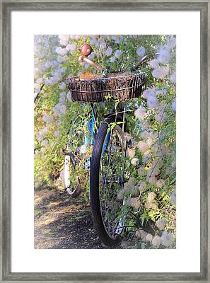 Rustic Bicycle Framed Print by Athena Mckinzie