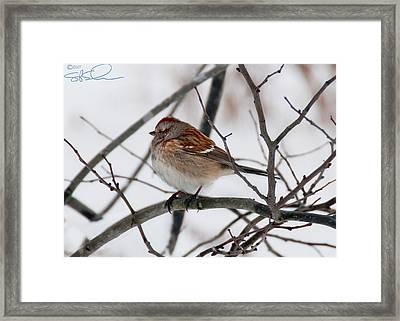 Rusty Cap Framed Print