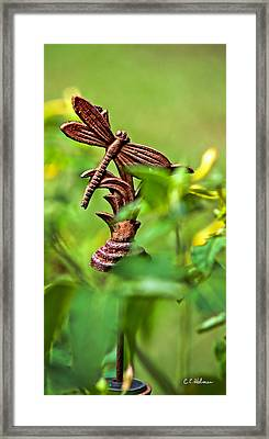 Rusty Dragonfly Framed Print by Christopher Holmes