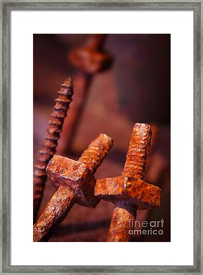 Rusty Screws Framed Print by Carlos Caetano