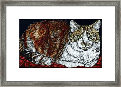 Rusty The Cat Framed Print by Robert Goudreau