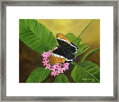 Rusty-tipped Butterfly  Framed Print by Maria Williams
