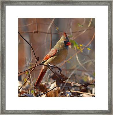 Framed Print featuring the photograph Rusty Wire Fence by Brian Stevens