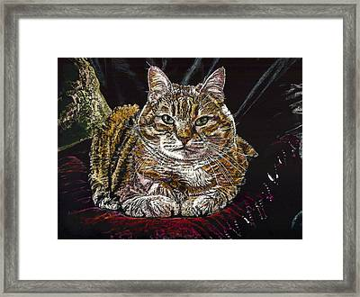 Ruthie The Cat Framed Print by Robert Goudreau