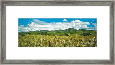 Rye  Framed Print by Elena Filatova