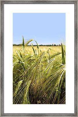 Rye Framed Print by Design Windmill