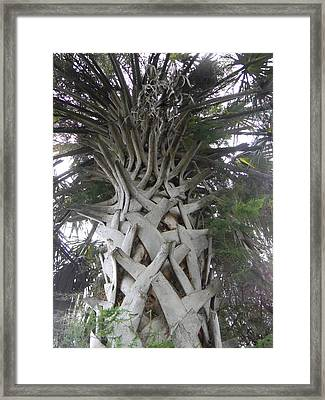 Sabal Palm Framed Print by Christy Usilton