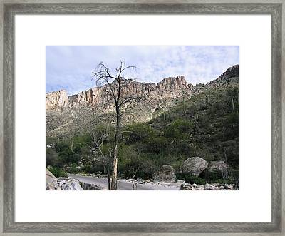 Sabino Canyon Az Framed Print