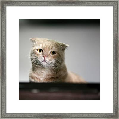 Sad Cat Framed Print by LeoCH Studio