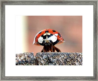 Framed Print featuring the photograph Sad Eyes by Chad and Stacey Hall