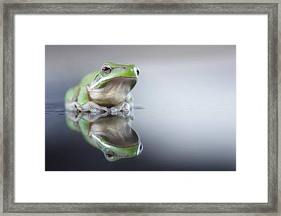 Sad Green Frog Framed Print by Darren Iz Photography