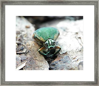 Framed Print featuring the photograph Sad June Bug by Chad and Stacey Hall