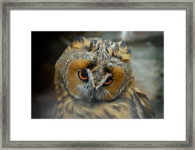 Sad Owl Framed Print