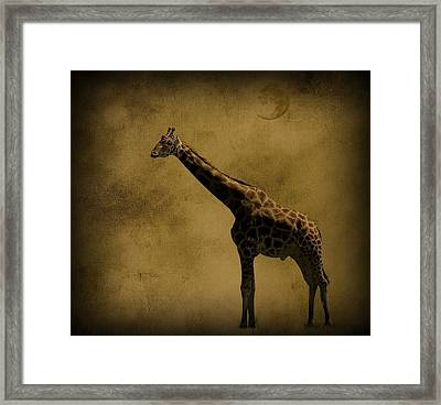 Safari Moon Framed Print