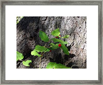 Framed Print featuring the photograph Safe Haven by Jim Sauchyn