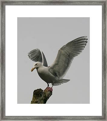 Safe Landing Framed Print by Melodie Douglas