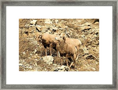 Safety In Numbers Framed Print by Adam Jewell