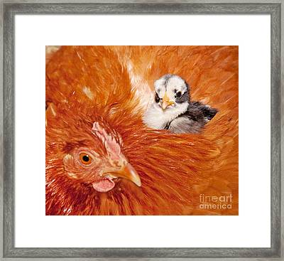 Safety Of Mama Hen Framed Print