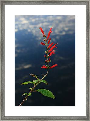 Sage Above Necanicum River Framed Print