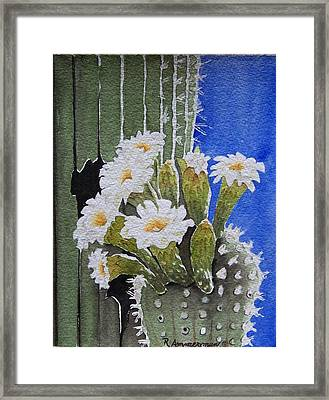 Saguaro Bloom Framed Print by Regina Ammerman