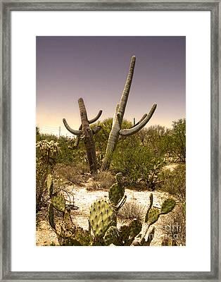 Saguaro Cactus Dance Framed Print by Gregory Dyer