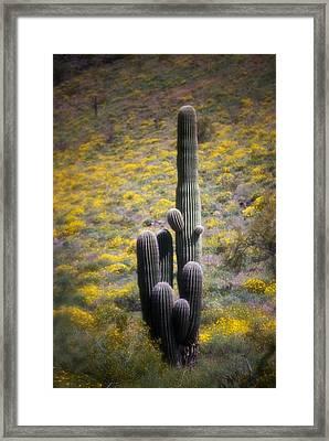 Saguaro Cactus In Springtime Wildflowers Framed Print by C Thomas Willard