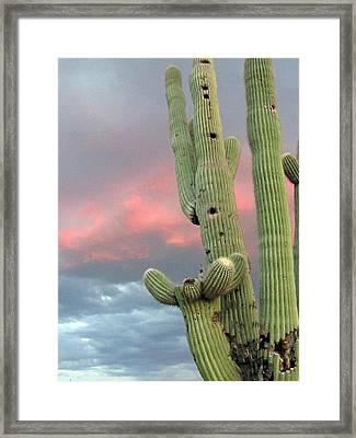 Saguaro In The Sky Framed Print by Wendi Matson
