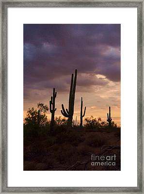 Saguaros After The Storm Framed Print by Patty Descalzi