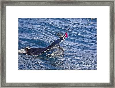 Sailfish Dance Framed Print