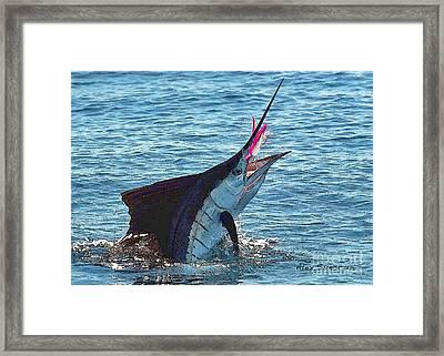Sailfish Shake Framed Print