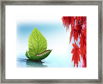 Sailing Alone Framed Print