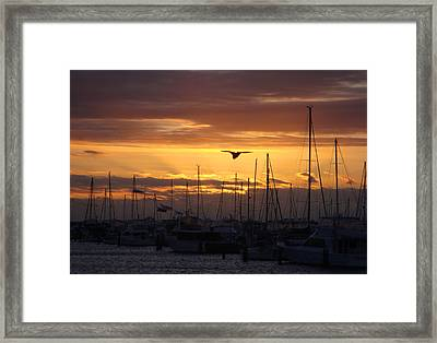 Sails At Sunset Framed Print by Kelly Jones