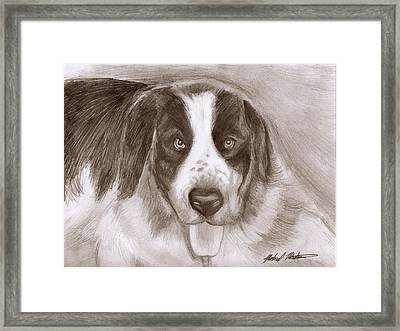 Saint Bernard Framed Print by Michael Mestas