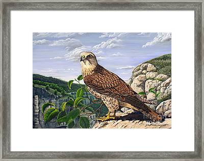 Saker Falcon Falco Cherrug Framed Print
