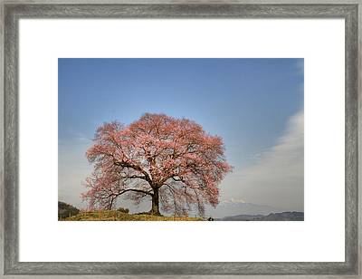 Framed Print featuring the photograph Sakura Sakura 2 by Tad Kanazaki
