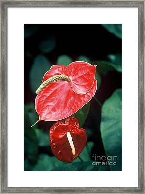 Salad Framed Print by Alcina Morello