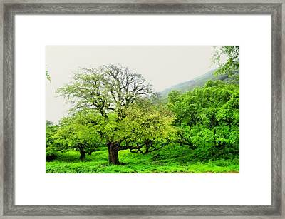Salalah Green Framed Print