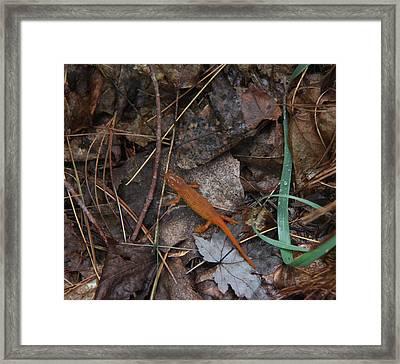 Salamander Framed Print by Lali Partsvania