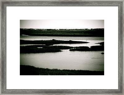 Salt Marsh Framed Print by Jez C Self