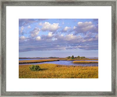 Saltwater Marshes At Cedar Key Florida Framed Print by Tim Fitzharris