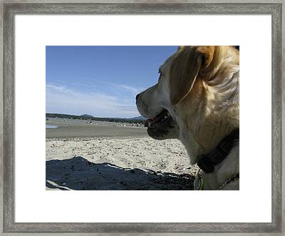 Framed Print featuring the photograph Salty Dog by Brian Sereda