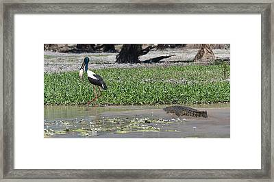 Salty Sneaking Up On A Black Stork Framed Print